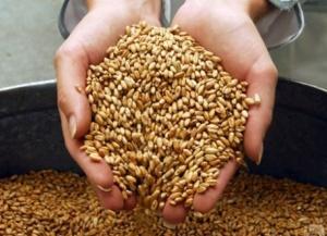 На Дону создается Зерновой союз
