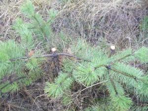 В Ростовской области браконьер предлагал милиционеру взятку, чтобы избежать ответственности за вырубку леса