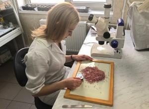 В Волгоградской области выявлена партия некачественного семенного материала