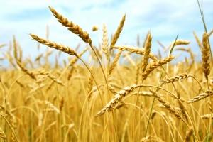 Донской союз зернопроизводителей вступил в Российский Зерновой Союз